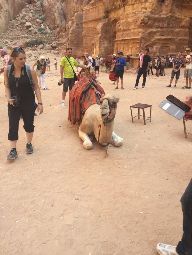 camel smiling in petra jordan